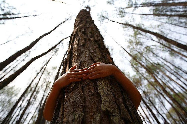 Curiosidades sobre sustentabilidade - Politorno Blog