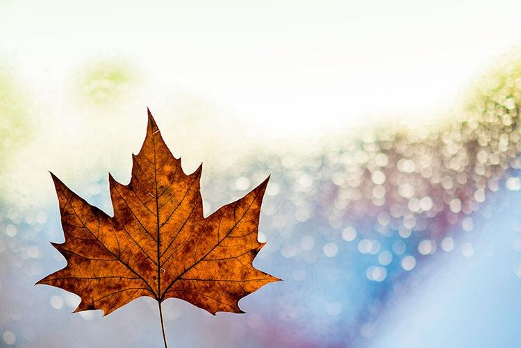 Outono chegou - Blog Politorno